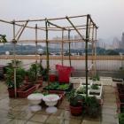 Samedi Brico: Pergola en Bambou