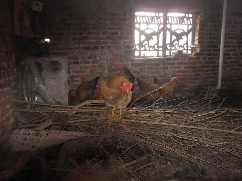 Le Poulailler